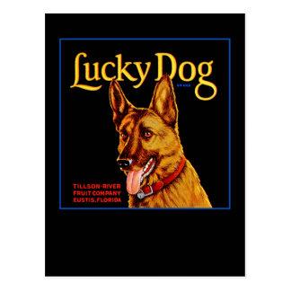 Perro afortunado