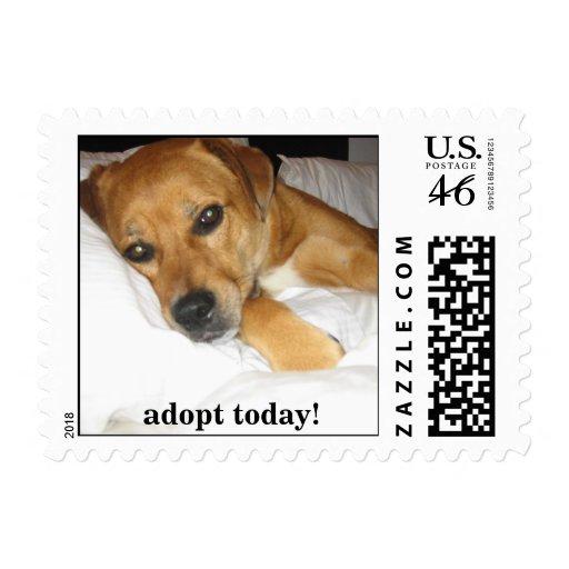 Perro afortunado - adopte un perro sellan hoy - mu franqueo