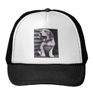 Perro agujereado gorras