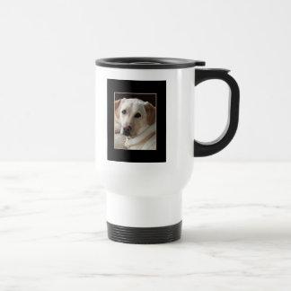 Perro amarillo del labrador retriever en la taza