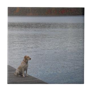 Perro amarillo en muelle azulejo cuadrado pequeño