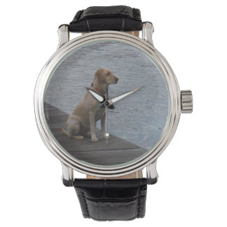 Perro amarillo en muelle relojes