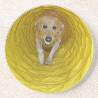 Perro amarillo en túnel amarillo con la bola amari posavasos de arenisca