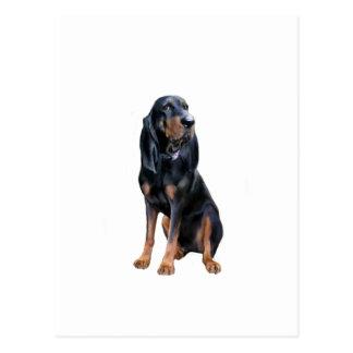Perro americano del Coon - negro y moreno Tarjetas Postales