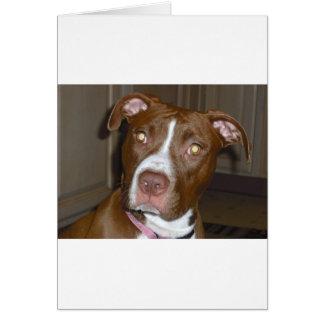Perro americano del icono y de la familia de APBT Tarjeta De Felicitación