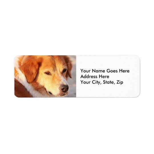 Perro anaranjado raro etiquetas de remite