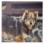 Perro anaranjado y negro azulejo