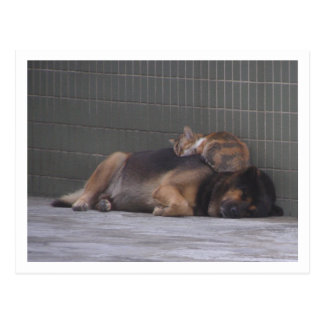 Perro animal del gato de los amigos que duerme jun postal
