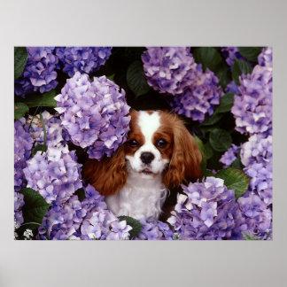 Perro arrogante del perro de aguas de rey Charles Poster