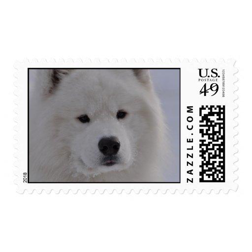 Perro ártico sellos
