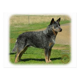 Perro australiano 9F060D-06 del ganado Postal