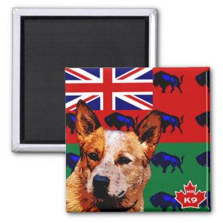 Perro australiano del ganado de Manitoba Imán Cuadrado