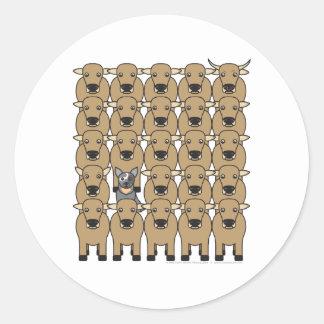 Perro australiano del ganado en la manada pegatina redonda