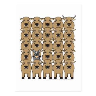 Perro australiano del ganado en la manada postal
