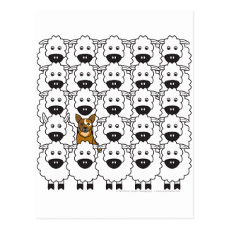 Perro australiano del ganado en las ovejas tarjetas postales