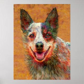 perro australiano del ganado póster