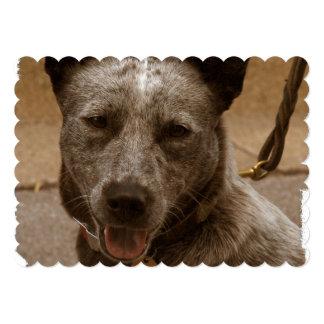 """Perro australiano dulce del ganado invitación 5"""" x 7"""""""