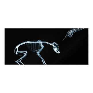 Perro azul de los esqueletos de la radiografía el comunicado personalizado