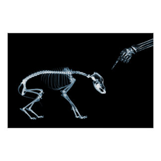 Perro azul de los esqueletos de la radiografía mún poster
