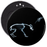 Perro azul de los esqueletos de la radiografía mún pin