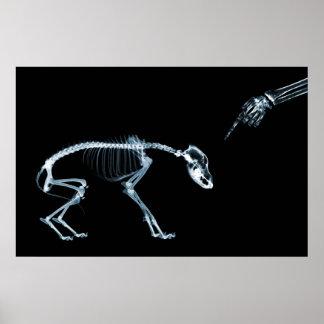Perro azul de los esqueletos de la radiografía mún póster