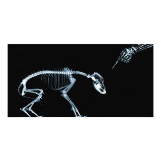 Perro azul de los esqueletos de la radiografía mún tarjetas fotograficas personalizadas