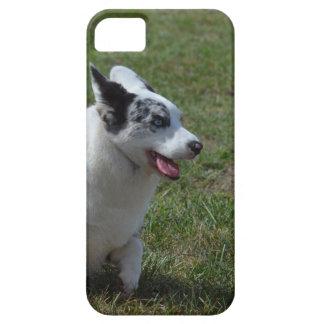 Perro azul del Corgi de Merle Funda Para iPhone 5 Barely There