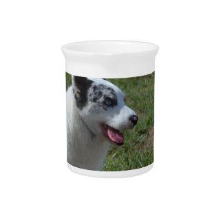 Perro azul del Corgi de Merle Jarra