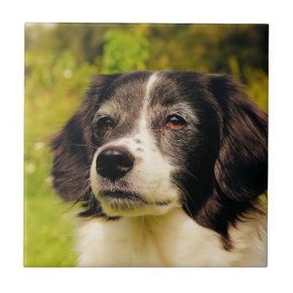 Perro Azulejo Cuadrado Pequeño