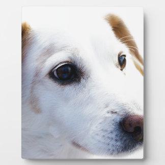 Perro blanco con los ojos fieles, perros de