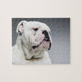 Perro blanco de Bull Puzzles Con Fotos