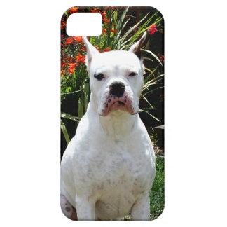 Perro blanco del boxeador iPhone 5 carcasa