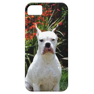 Perro blanco del boxeador iPhone 5 carcasas