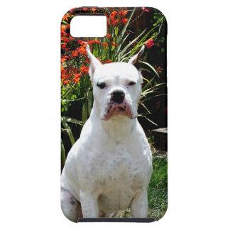 Perro blanco del boxeador iPhone 5 funda