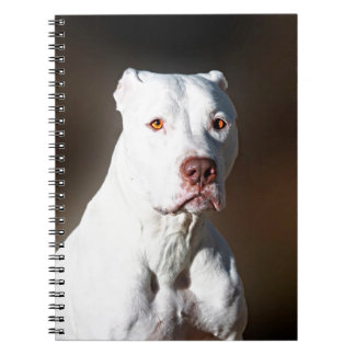 Perro blanco del rescate de Pitbull Terrier del am Libretas