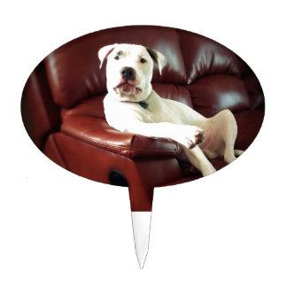 perro blanco divertido del pitbull en el sofá decoración de tarta