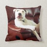 perro blanco divertido del pitbull en el sofá cojines