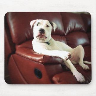 perro blanco divertido del pitbull en el sofá tapete de raton
