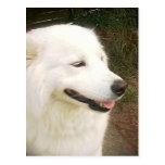 Perro blanco dulce bonito del samoyedo tarjeta postal