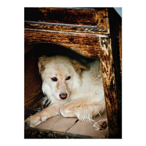 """Perro blanco invitación 6.5"""" x 8.75"""""""