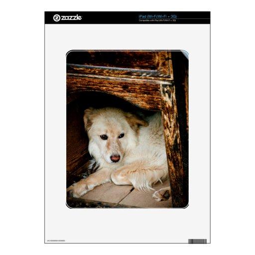 Perro blanco iPad skin