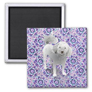 Perro blanco lindo de Maltipoo pequeño Imán Cuadrado