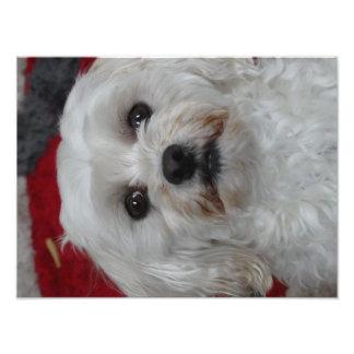 Perro blanco lindo fotografías