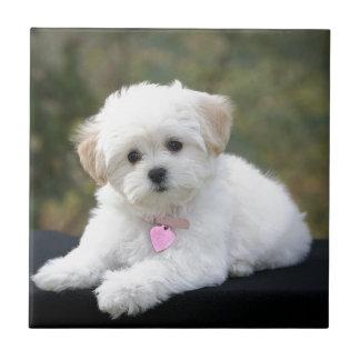 Perro blanco mullido tejas  ceramicas
