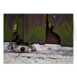Perro blanco que mira a escondidas debajo de la tarjeton