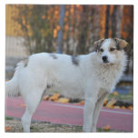 Perro blanco teja  ceramica