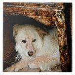 Perro blanco teja cerámica