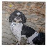 Perro blanco y negro azulejos ceramicos