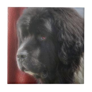 Perro blanco y negro de Terranova Azulejo Cuadrado Pequeño