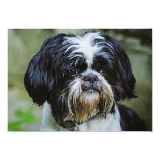 Perro blanco y negro anuncios